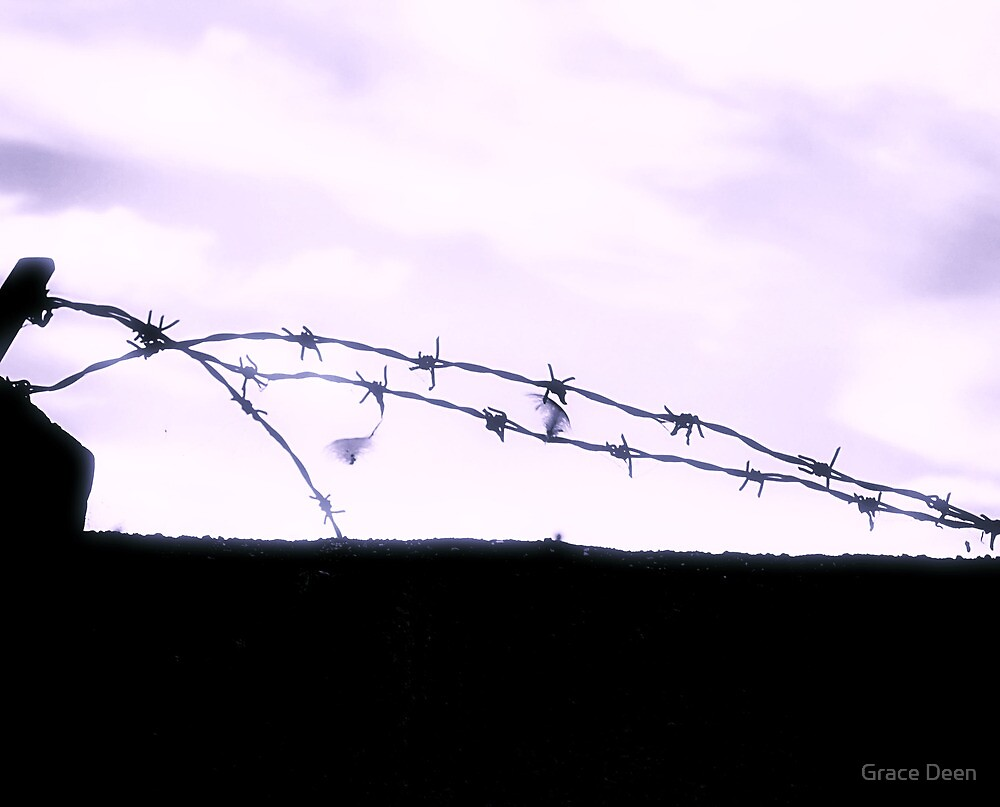 barb wire by Grace Deen