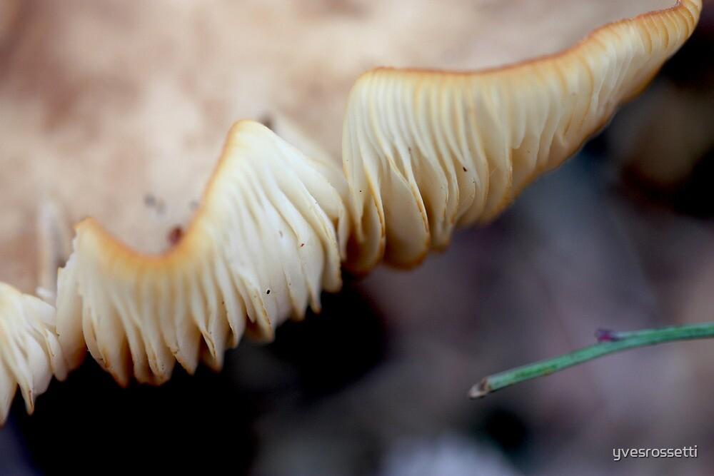 gills by yvesrossetti