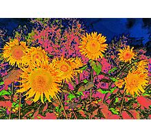 Sunflowers Vibrance  Photographic Print