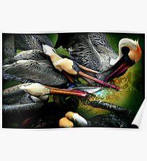 Pelican fight II Poster