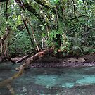 Jungle Shoreline III by Reef Ecoimages