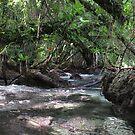 Jungle Shoreline IV by Reef Ecoimages
