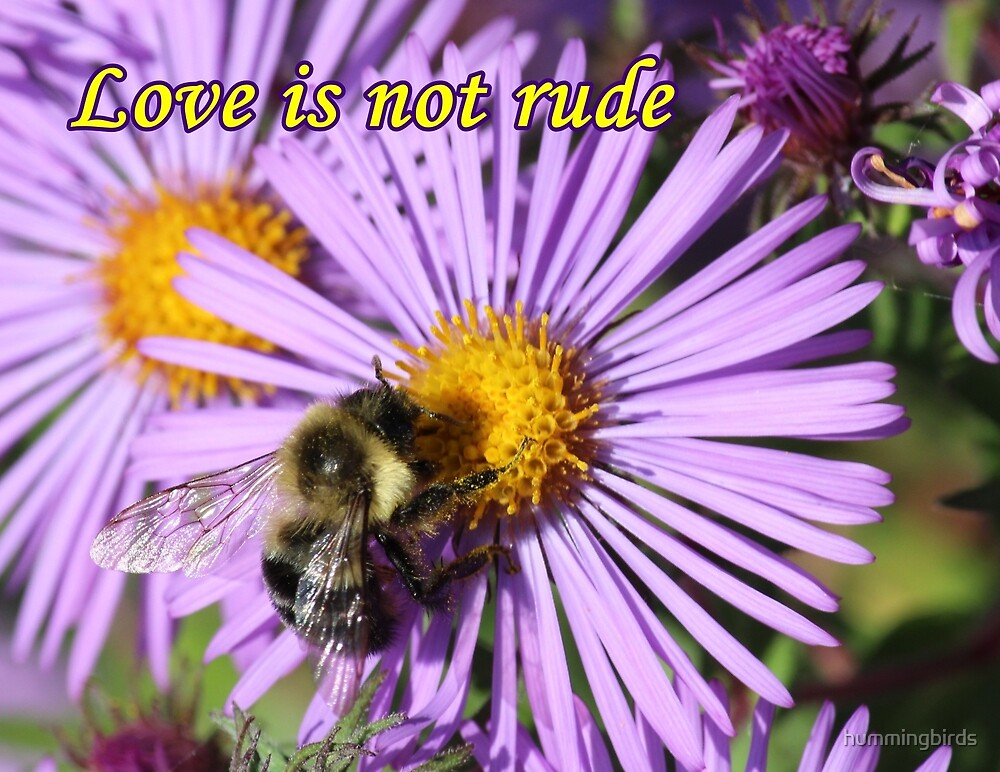 Love is not rude by hummingbirds