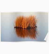 Reflected Grass Poster