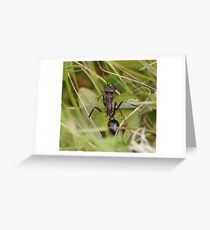 Inch Ant 0144 Greeting Card