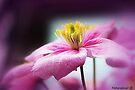 Blush Pink by naturelover