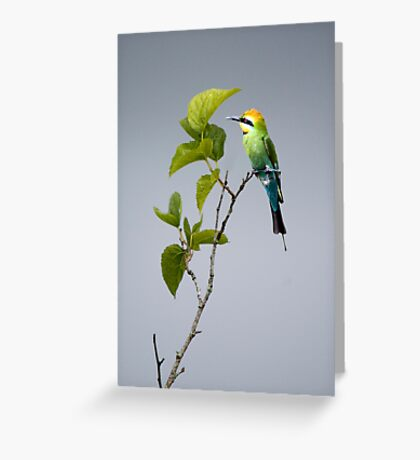 Out on a Limb - Rainbow Bee-eater Greeting Card