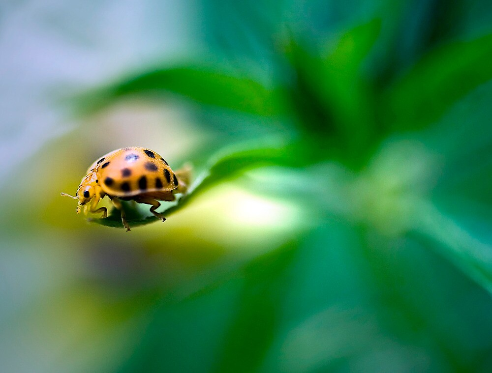 Living on the edge - ladybug on a leaf by Jenny Dean