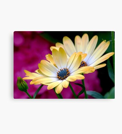 The beauty and the blurry Canvas Print