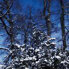 Winter by Dania Reichmuth