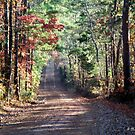 Going Home - Dirt road in Cass County, Texas by Betty Northcutt