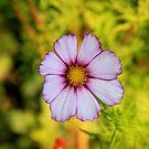 Flower by smallan