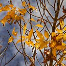 Autumn Gold by Sue  Cullumber