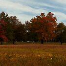 "Fall Foliage at Waveny by Christine ""Xine"" Segalas"