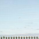 23 Palms by p r