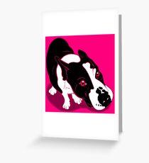 Mr Bull Terrier Pink Greeting Card