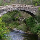 Stone Bridge - Cevennes National Park, France by Marilyn Harris