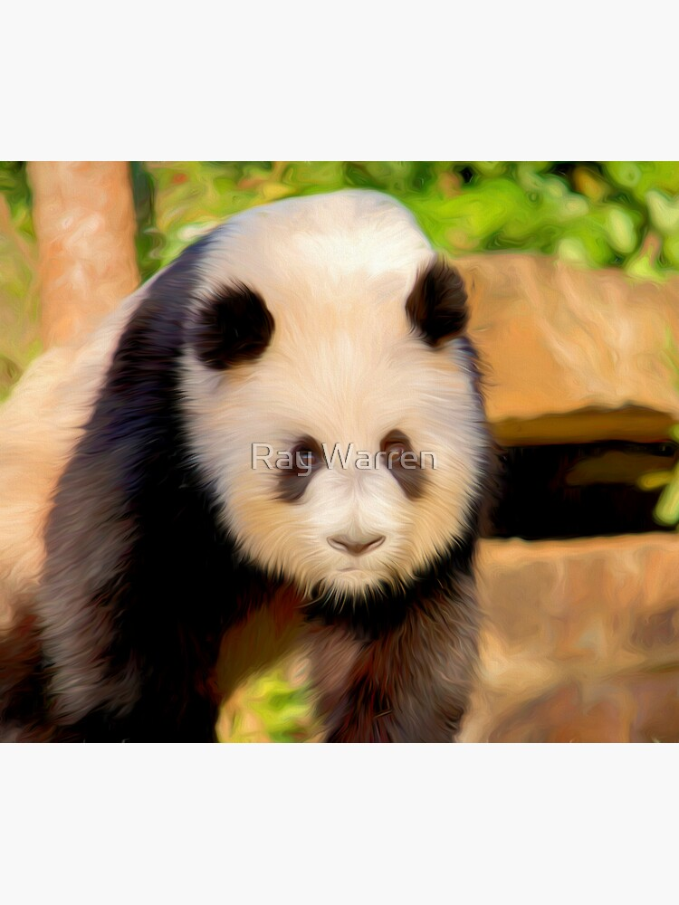 Giant Panda (digital painting) by RayW