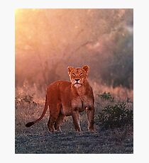 Searching For Cubs Photographic Print