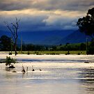 Rising Floodwater by Kym Howard