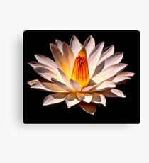 Yellow Glow Fragrant Water Lily Canvas Print