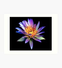 Luminous Blue Water Lily Art Print