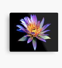 Luminous Blue Water Lily Metal Print