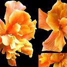Double Orange Hibiscus by Madalena Lobao-Tello