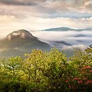 Looking Glass Rock at Sunrise w/ Fog - Blue Ridge Parkway by Dave Allen