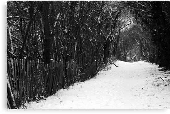 Winter's Trail by SquarePeg