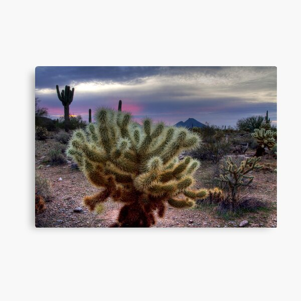 Sonoran Sunrise Canvas Print