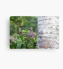 Bird Eating an Insect Canvas Print