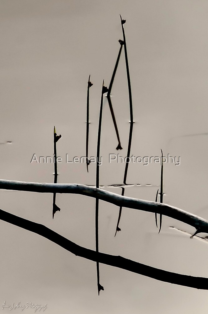 Mirage by Annie Lemay  Photography