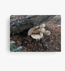 It's getting crowded in here!  Step off, fungi! Metal Print