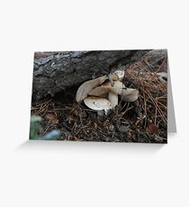 It's getting crowded in here!  Step off, fungi! Greeting Card