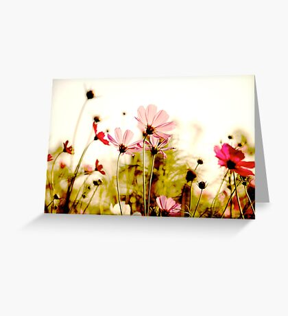 Delicate: Sold Feb 28,2011+SOLD 2014: On Featured: Natural-color-and-light Group Greeting Card