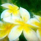 Plumeria at its Finest by linaji
