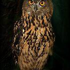 Portrait Of An Eagle Owl by Alexandra Lavizzari
