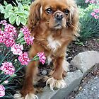 Bernie Sitting in the Carnations Ready to Go by Cara Schingeck