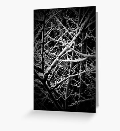 The Wood for the Trees Greeting Card