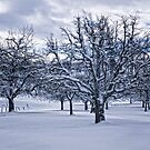 Winter Trees by Dania Reichmuth