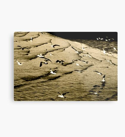 The gull's army of seabirds was forced to concede Metal Print