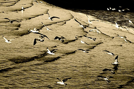 The gull's army of seabirds was forced to concede by Richard Pitman