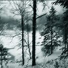Winter forest by Marlies Odehnal