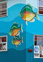fish on the wall by Manon Boily