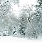 Winter's Whisper by Jessica Jenney
