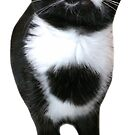 Standing Tuxedo Cat by mintdawn