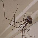 Spider by Eeva47