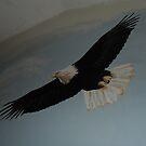the eagle soars high by lynnieB
