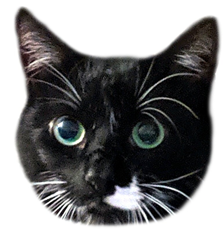 Green Eyed Tuxedo Cat by mintdawn